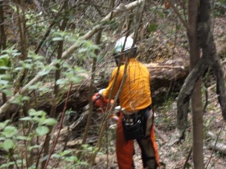DSCF1468整理伐作業