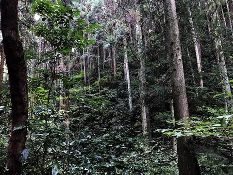 20191008定例人工林1