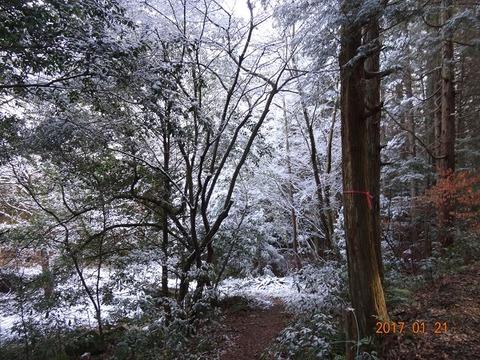 猿投の森雪