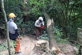 画像3山頂の枯死木伐倒後の処理