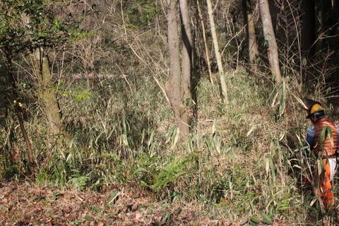 0213笹刈り作業前