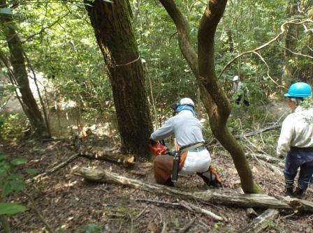 DSCF0874枯死木伐倒処理