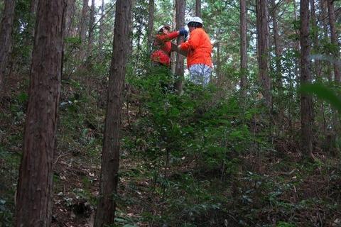 毎木調査写真