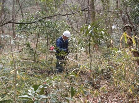 DSCF1139林床笹刈
