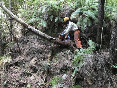 20200523第2管理人工林G1
