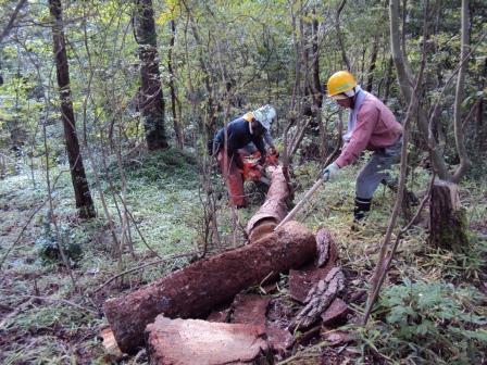 DSC03534 (1024x768)枯死木処理