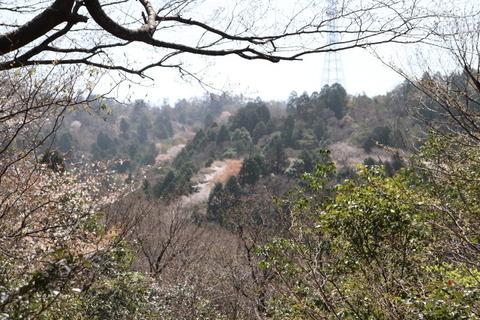 31日雲興寺側からの山桜コース