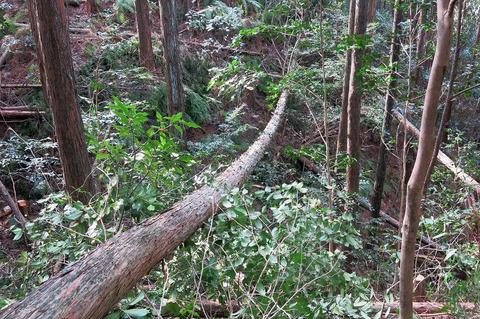 20170325人工林