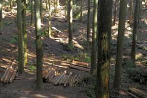 23 人工林 間伐後整理