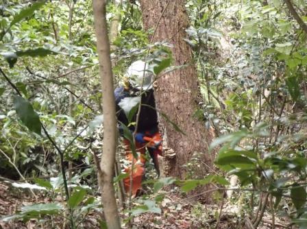 DSCF1698枯死木伐倒