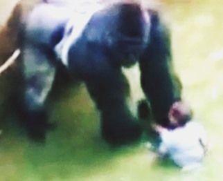gorilla600 3.jpg