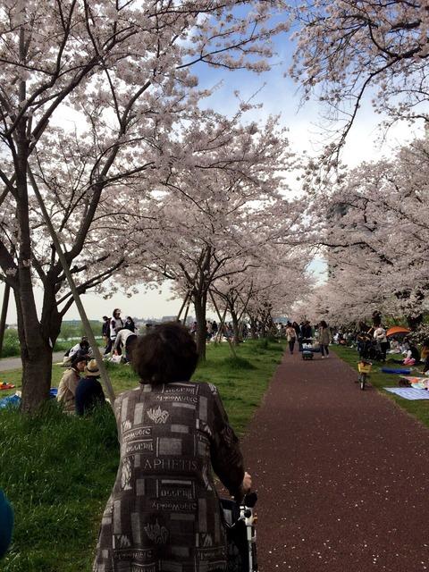 キレイだ!!桜(*´꒳`*)