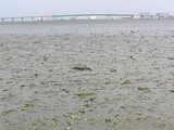 汐川干潟-20060329