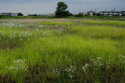 川原の草むら