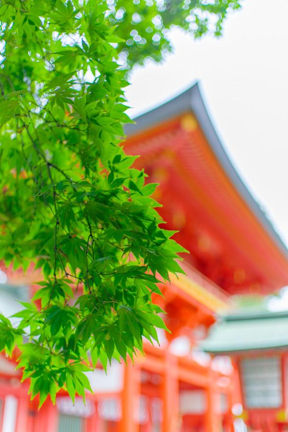 武蔵一宮 氷川神社にお参り