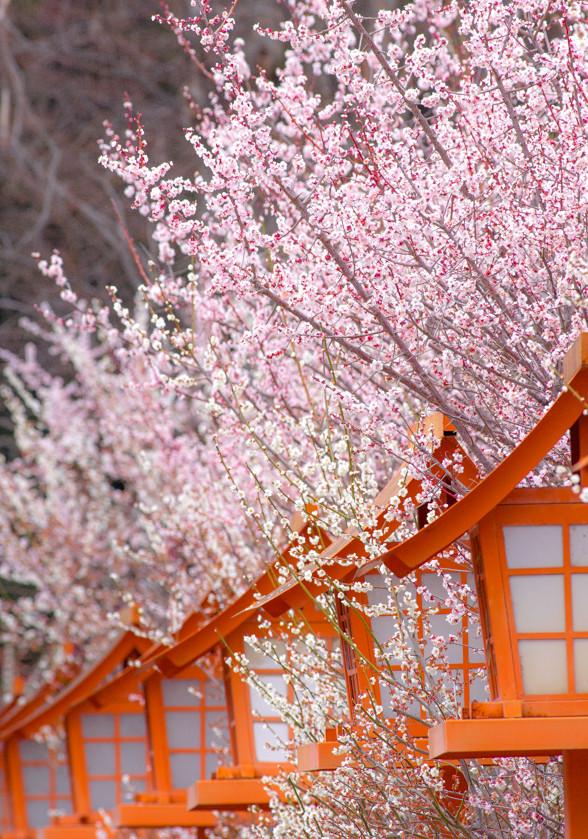 物欲に悶絶しながら、PENTAX で 満開の梅を撮る