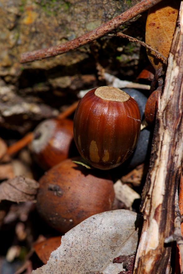 K-1 のカスタムイメージ 「風景」で 小さい秋を撮る