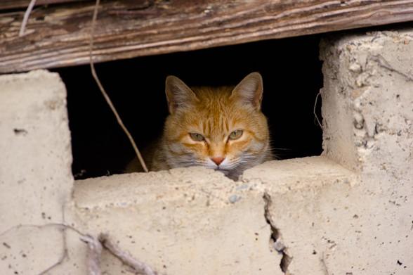 架空野良猫に写真を見せてみる
