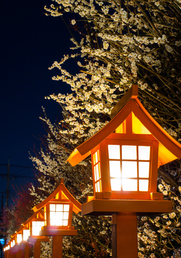 PENTAX で 夜の梅を撮る