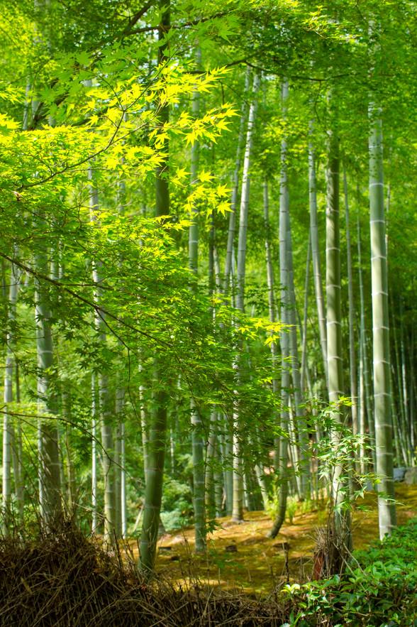 京都へ行きたい!くぅぅー