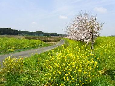 nanohana-road