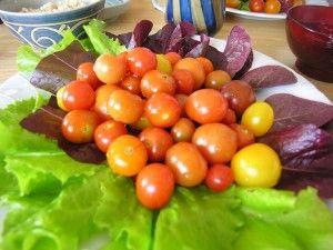 無農薬・無化学肥料で育った美味しい野菜たち