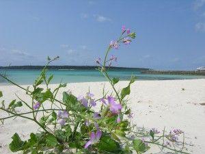 私が宮古島に移住した3つの理由