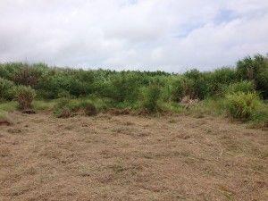宮古島のうるかで畑を開墾しています。