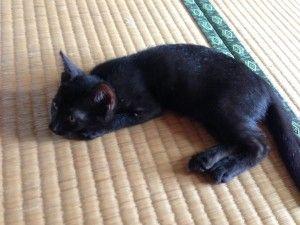 黒猫は撮るのむずかしんだわこれ。