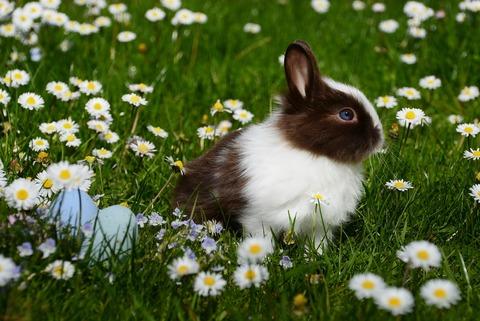 animal-bright-bunny-372166