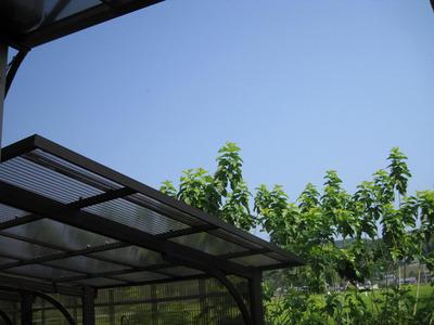屋根より高い桑
