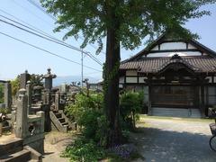 勝厳寺のイチョウの木