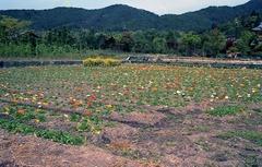19920426京都104