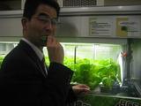 レタスを食べる