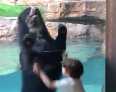 【動画】子供と一緒にジャンプしまくるクマがぐうかわなんだがwwwww