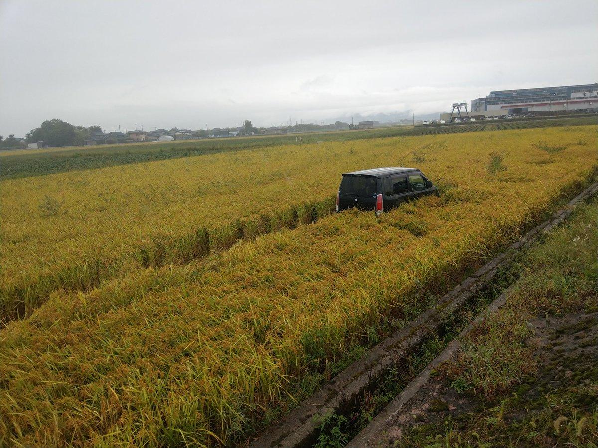 軽自動車、刈取り直前の田んぼの中を爆走wwww