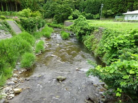 鮎の遡上する川
