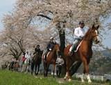 桜並木トレッキング