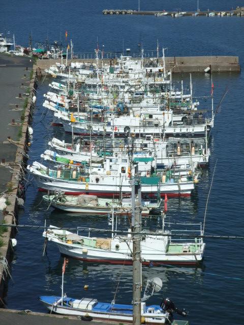 鳥取 イカ 釣り
