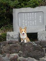 2009izu11