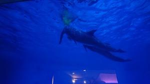 夜の水族館🐠🌃