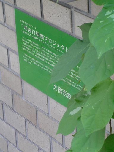 朝顔@西鉄大橋商店街