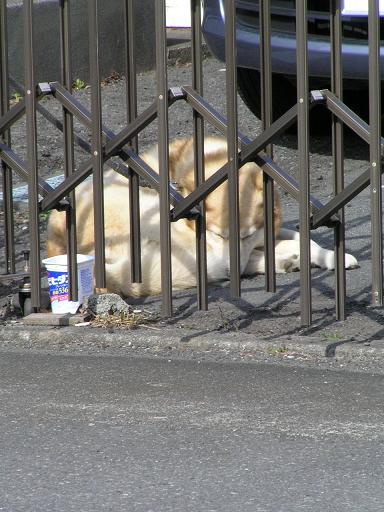 寒いけど屋外飼い犬