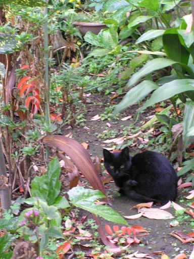 """庭のよそ猫。""""おとしもの""""には困ってます"""