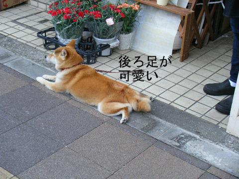 後ろ足をべちゃとするワンコ犬