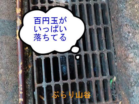 側溝に百円玉が落ちた