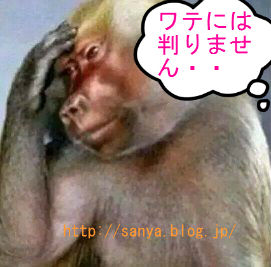 お猿のおもしろ画像