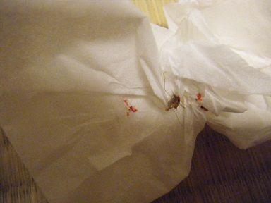 冬でも蚊に血を吸われた