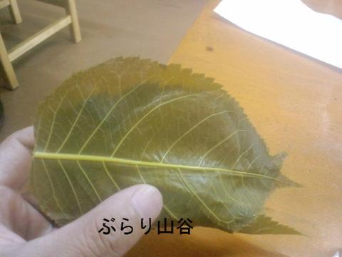 桜餅の葉って食べる?