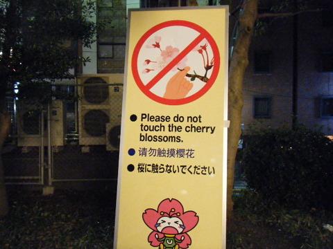 桜に触らないでくださいの看板